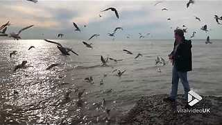 Feeding seagulls in slow motion || Viral Video UK - Video