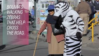 How 'zebras' are helping save lives in La Paz - Video