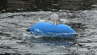 Playful dolphins just want to have fun