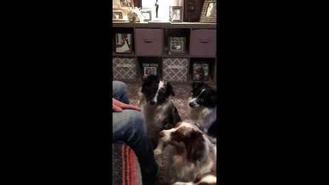 Four good dogs receive air treats with enthusiasm