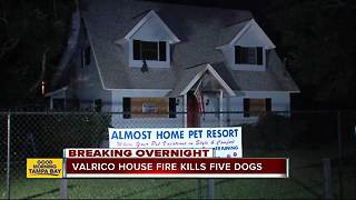 Five dogs die in house fire at Valrico pet resort - Video