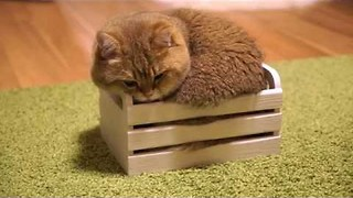 Kitty Finds Wooden Crate, Claims it as New Bed - Video