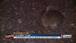 State, animal advocates at odds over feral rabbits problem - Video