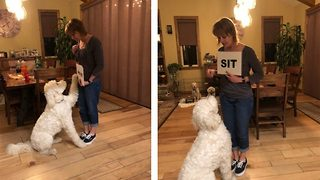 Video shows goldendoodle is one clever canine who can read commands - Video