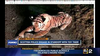 Police end standoff with toy tiger - Video