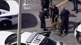 Kangaroo captured by police in Fort Lauderdale