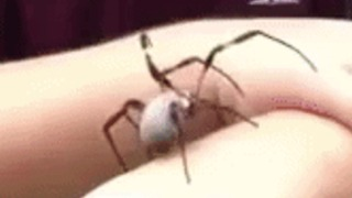 Young Boy Plays With Venomous Spider - Video