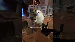 Harley the Cockatoo Sings Her New 'Cup Song' - Video