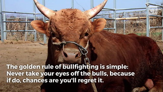 Man Forgets Golden Rule of Bulls - Video