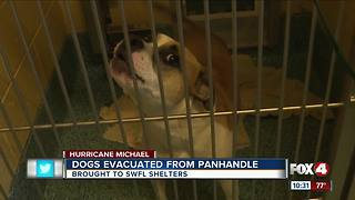 Naples Human Society saves 46 dogs from Hurricane Michael