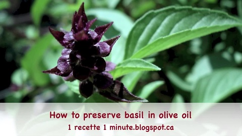 How to preserve basil in olive oil