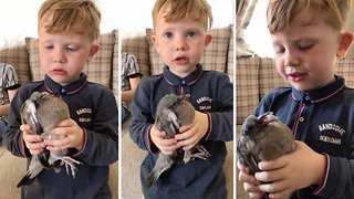 Young animal lover, three, saves pigeon - Video