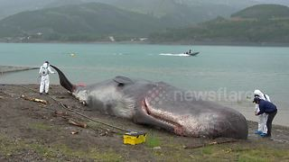 Beached 'whale' fools local residents in the French Alps - Video