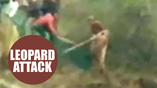 Terrified leopard mauled two men - Video
