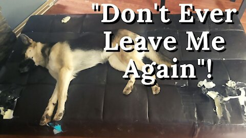 Naughty Husky + German Shepherd Mix Destroys Our House While Out | Maple Has No Regrets