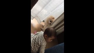 Baby plays adorable game of hide-and-seek with doggy  - Video