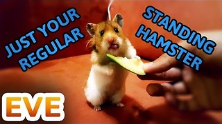 Here's an Adorable Hamster Eating a Lovely Cucumber - Video
