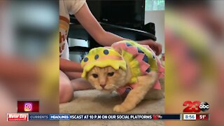Easter cat costume