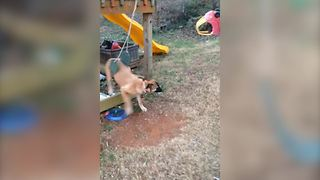 Funny Dog Gets Stuck In A Swing - Video