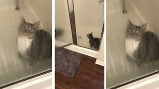 Instant regret – Adorable cat left wide eyed with fear as owner closes shower door