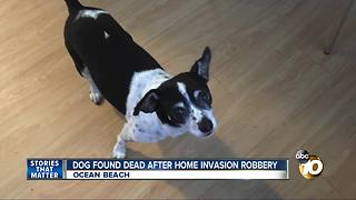 Dog found dead after home invasion robbery - Video