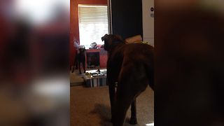 Cute Dog Meets His Reflection For The First Time - Video
