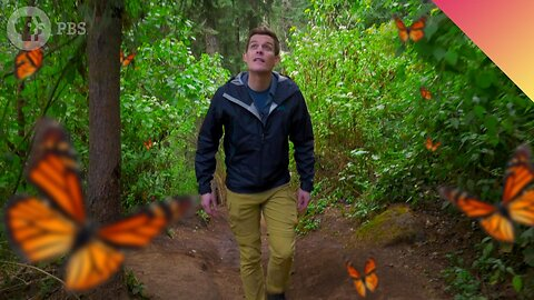 The Mystery of the World's Greatest Butterfly Migration