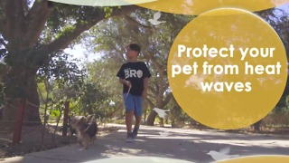 Protect your pet from heat waves - Video