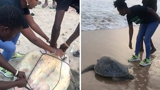 Sea turtle dramatically saved from poachers and released back into the ocean
