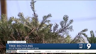 Christmas tree recycling encouraged by the City of Tucson