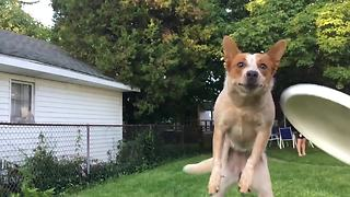 Slow motion footage captures dog's epic frisbee fail - Video