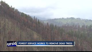 Restoration efforts underway to repair land damaged by the Pioneer Fire - Video