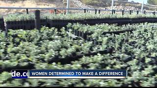 Female prisoners plant sagebrush to help protected species - Video