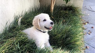 Cute Puppy destroying the garden  - Video