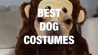 Delightful Dogs in Adorable Costumes - Video
