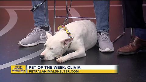 Pet of the week: 7-year-old Olivia is eager to please but prefers not to share her treats