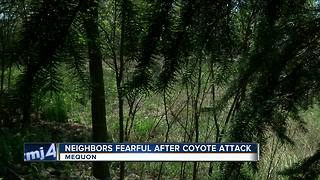 Neighbors fearful after coyote attacks dog - Video
