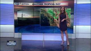 Tropical San Diego Day - Video