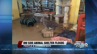 Local animal shelter floods during Monsoon