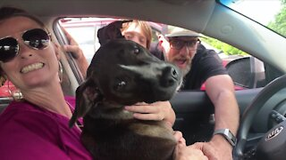 Family reunited with dog that was stolen and taken 50 miles away