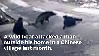 Watch What Happens When Boar Attacks Disarmed Village - Video