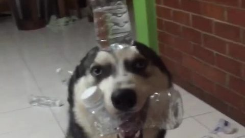 Dog forced to balance water bottle after making mess