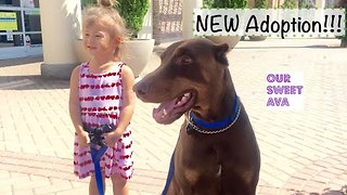 Loving Family Adopt a Dashing Doberman - Video
