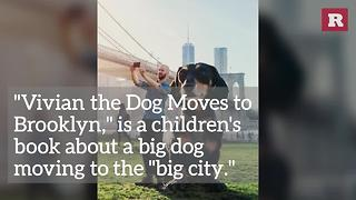 Little Dog, Big City | Rare Animals