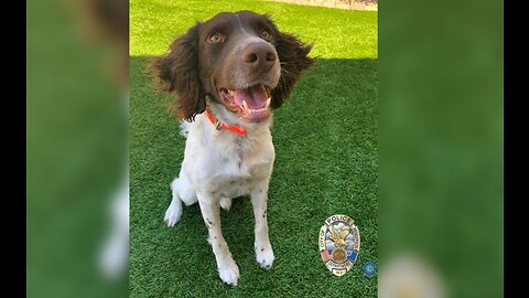Henderson Police Department K-9 officer has died unexpectedly