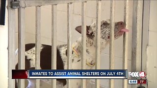 Inmates will help calm animals during fireworks