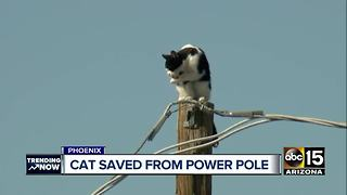 Top stories: Cat stuck on pole; deadly wrong-way crash arrest - Video