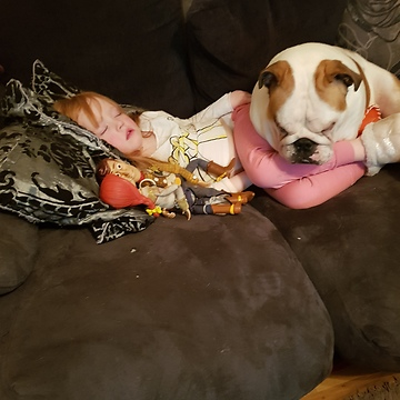 English Bulldogs preciously watch over sleeping girl