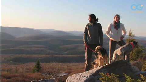 This Couple Walked Their Dogs Across America To Promote Animal Welfare