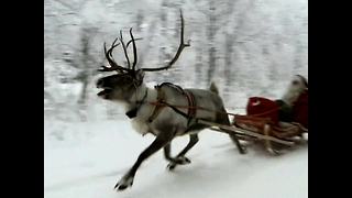 The Reindeer of Lapland - Video